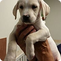 Adopt A Pet :: Charlie ~ Adoption Pending - Youngstown, OH