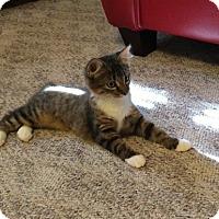 Adopt A Pet :: Stormy (IV) - Bentonville, AR
