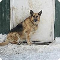 Adopt A Pet :: Referral - Maddie - Denver, CO
