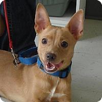 Adopt A Pet :: Jaxx - Erwin, TN
