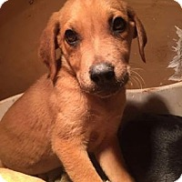 Adopt A Pet :: Tippy - North Brunswick, NJ
