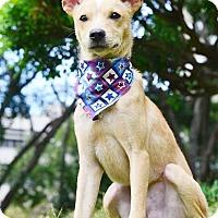 Adopt A Pet :: Saro - Castro Valley, CA