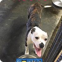 Adopt A Pet :: KeeKee - Boston, MA