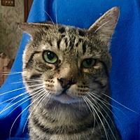 Adopt A Pet :: Gabriel - Bloomsburg, PA