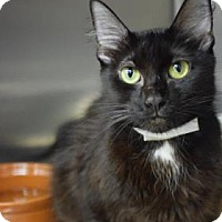 Adopt A Pet :: Garnet - Bradenton, FL