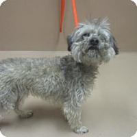 Adopt A Pet :: Ace - Reno, NV