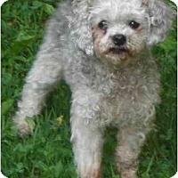 Adopt A Pet :: Kaya - Rigaud, QC