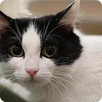 Adopt A Pet :: Annie - Sacramento, CA
