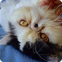 Adopt A Pet :: Morpheous - Beverly Hills, CA