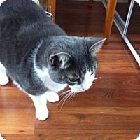 Adopt A Pet :: Prescious - Toronto, ON