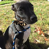 Adopt A Pet :: Captain Jack in CT - Manchester, CT