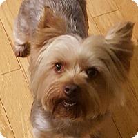 Adopt A Pet :: Sophie - Las Cruces, NM
