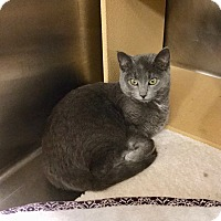 Adopt A Pet :: Snickers-Adoption Pending! - Colmar, PA