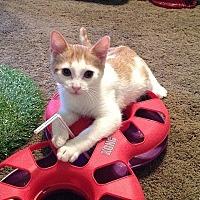 Adopt A Pet :: Lorenzo - Tampa, FL