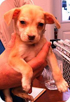 Mixed Breed (Medium) Mix Puppy for adoption in Kalamazoo, Michigan - Murphy