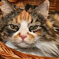 Adopt A Pet :: Cassie - Alexandria, VA