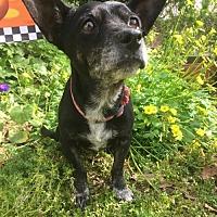 Adopt A Pet :: Rosemary - Costa Mesa, CA