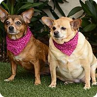 Adopt A Pet :: Bella - Rancho Palos Verdes, CA