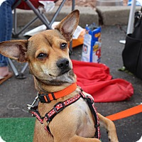 Adopt A Pet :: Felix - Yuba City, CA