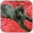 Photo 1 - Domestic Shorthair Cat for adoption in Mt. Prospect, Illinois - Mystery