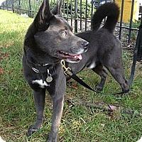 Adopt A Pet :: Dracula - Richmond, VA