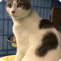Adopt A Pet :: Vincenzo - New York, NY