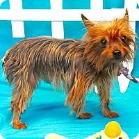 Adopt A Pet :: Jasper - Baton Rouge, LA