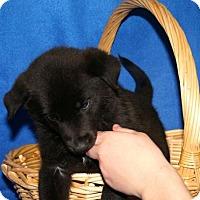 Adopt A Pet :: Donner - Erwin, TN