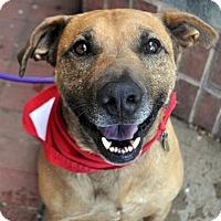 Hound (Unknown Type) Mix Dog for adoption in Fairfax Station, Virginia - Rico