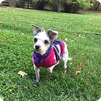 Adopt A Pet :: Daisy - Wilmington, DE