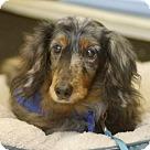 Adopt A Pet :: Sebastian *Adopt or Foster*