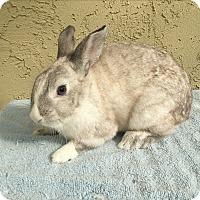 Adopt A Pet :: Oyster - Bonita, CA