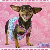 Adopt A Pet :: Demi - Phoenix, AZ