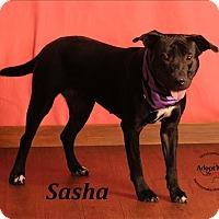 Adopt A Pet :: Sasha - Topeka, KS