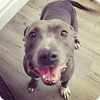 Adopt A Pet :: Jessi - Concord, CA