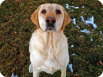 Labrador Retriever Mix Dog for adoption in Meridian, Idaho - Charlie
