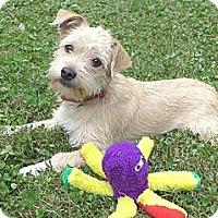 Adopt A Pet :: Molly - Mocksville, NC