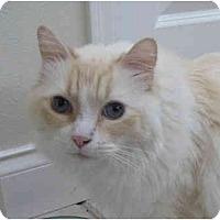 Adopt A Pet :: Grimilken - Keizer, OR