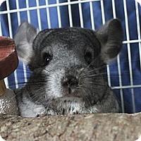 Adopt A Pet :: Casey - Titusville, FL