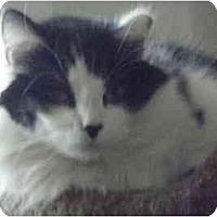 Adopt A Pet :: Katie - Kensington, MD