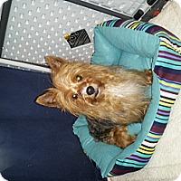 Adopt A Pet :: China Girl - Denver, IN
