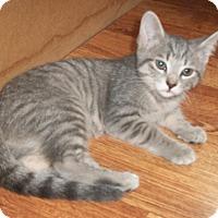 Adopt A Pet :: Toosweet - Leamington, ON