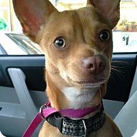 Adopt A Pet :: BEAN - Emeryville, CA