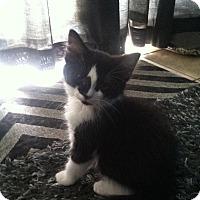 Adopt A Pet :: Guinevere - Simpsonville, SC