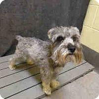 Adopt A Pet :: Fritz - Laurel, MD