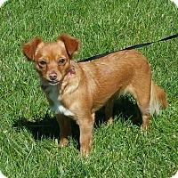 Adopt A Pet :: RUBY - Gustine, CA