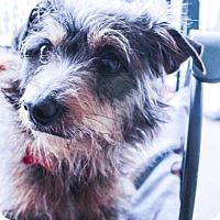 Adopt A Pet :: Jason - Plano, TX