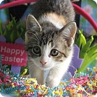 Adopt A Pet :: Hershey - Little Rock, AR