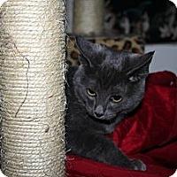 Adopt A Pet :: Grasshopper - Santa Rosa, CA