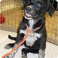 Adopt A Pet :: Bryant - Phoenix, AZ